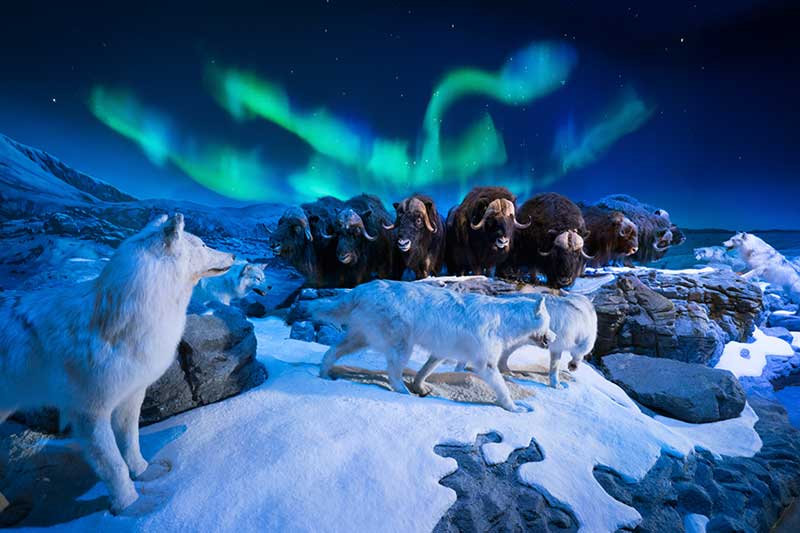 Wonders-of-Wildlife-Northern-Lights-web